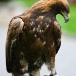 Kazakhstan mighty falcons views