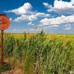 The landscapes of Kazakhstan steppe