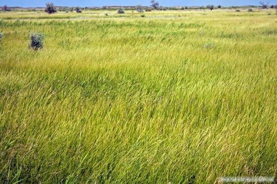 Kazakhstan steppe view 5