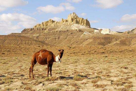 Mangystau oblast, Kazakhstan landscape 1