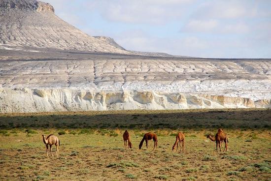 Mangystau oblast, Kazakhstan landscape 10