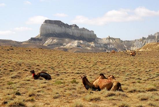 Mangystau oblast, Kazakhstan landscape 12