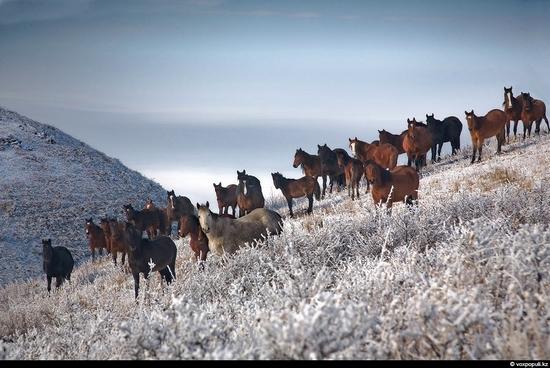 Almaty oblast, Kazakhstan beauty 14