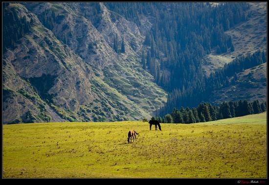 Dzungarian Alatau mountain range, Kazakhstan view 7