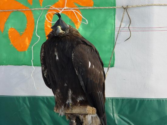 Kazakhstan - The hunt with tame hawks and falcons view 1