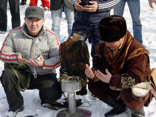 Kazakhstan - The hunt with tame hawks and falcons view 12