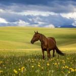 High-altitude summer pastures Taban-Karagai