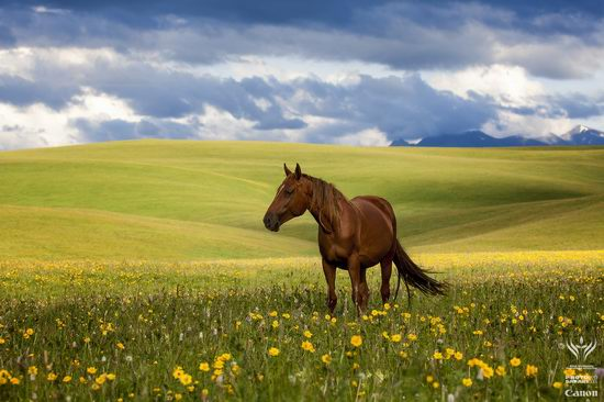Summer pastures Taban-Karagai, Kazakhstan view 1