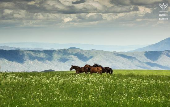 Summer pastures Taban-Karagai, Kazakhstan view 4