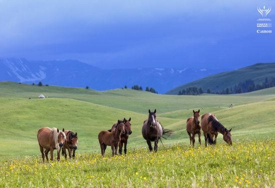 Summer pastures Taban-Karagai, Kazakhstan view 8