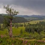 Markakolsky State Nature Reserve