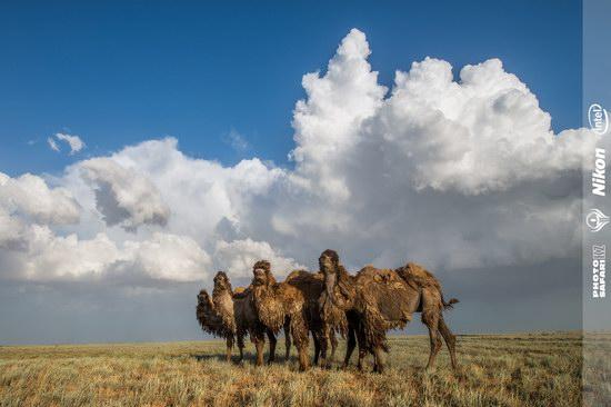 Western Kazakhstan - Mangystau region landscape photo 6