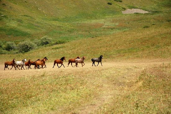 Hiking in Dzhungar Alatau, Kazakhstan photo 25