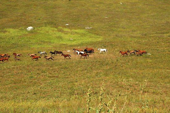Hiking in Dzhungar Alatau, Kazakhstan photo 29