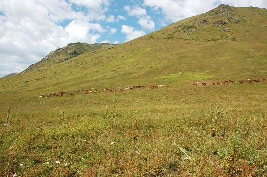 Hiking in Dzhungar Alatau, Kazakhstan photo 30