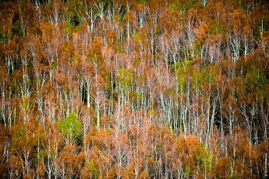 Autumn in the Mountains of East Kazakhstan, photo 5