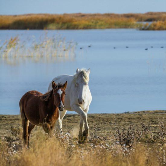 Expedition to Kyzylorda Region, Kazakhstan, photo 12