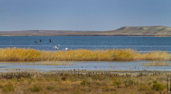 Expedition to Kyzylorda Region, Kazakhstan, photo 13