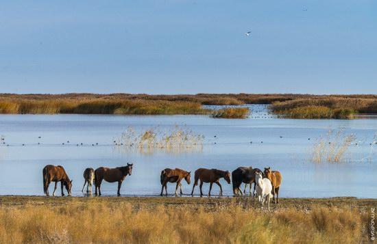 Expedition to Kyzylorda Region, Kazakhstan, photo 7