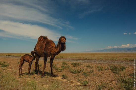 Walking along the mountain passes of Kazakhstan, photo 3