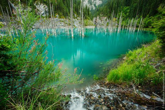 Sunken Forest, Kaindy Lake, Kazakhstan, photo 1
