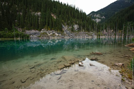 Sunken Forest, Kaindy Lake, Kazakhstan, photo 4
