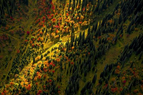 All the colors of Kazakhstan autumn, photo 6