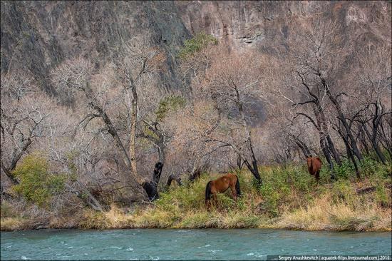Grand Canyon in Kazakhstan, photo 23