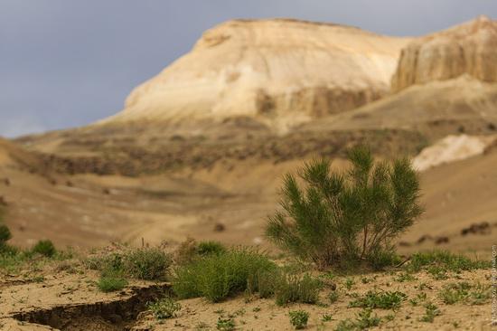 One day on Boszhira Tract, Kazakhstan, photo 21