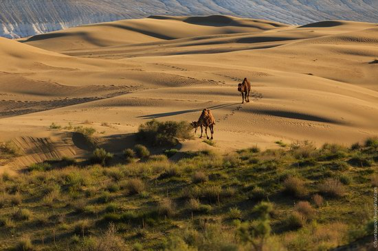Senek sands, Mangystau region, Kazakhstan, photo 13