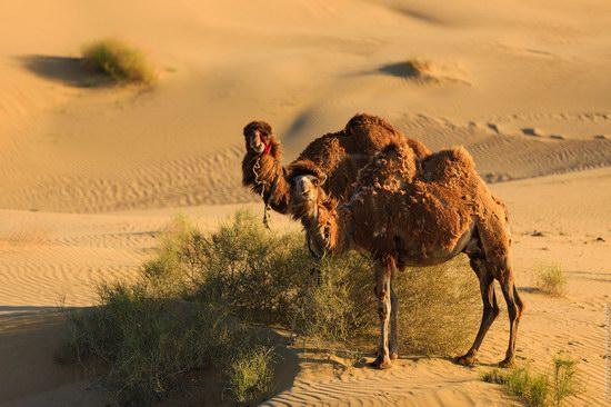 Senek sands, Mangystau region, Kazakhstan, photo 14