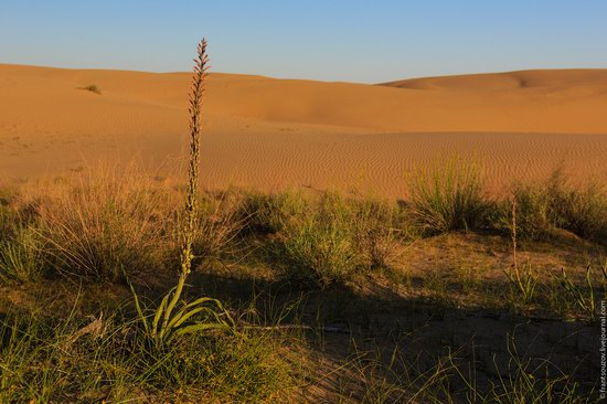 Senek sands, Mangystau region, Kazakhstan, photo 15
