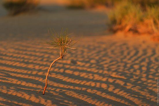 Senek sands, Mangystau region, Kazakhstan, photo 17
