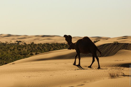 Senek sands, Mangystau region, Kazakhstan, photo 4