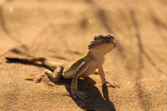 Senek sands, Mangystau region, Kazakhstan, photo 5