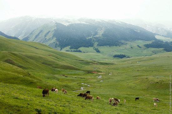 Snowy summer on Assy-Turgen mountain plateau, Kazakhstan, photo 12
