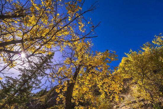 Golden Autumn on Kolsai Lakes, Kazakhstan, photo 10