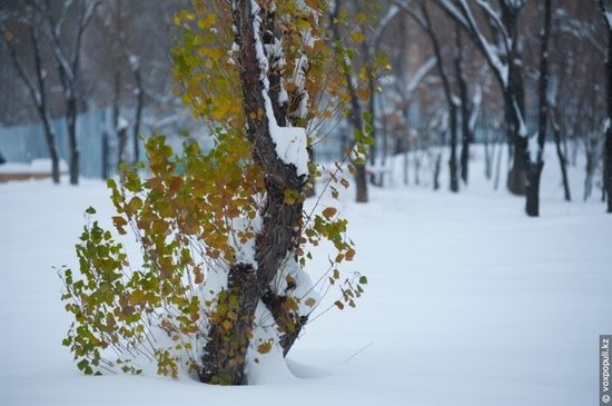 Almaty after heavy snowfall, Kazakhstan, photo 13