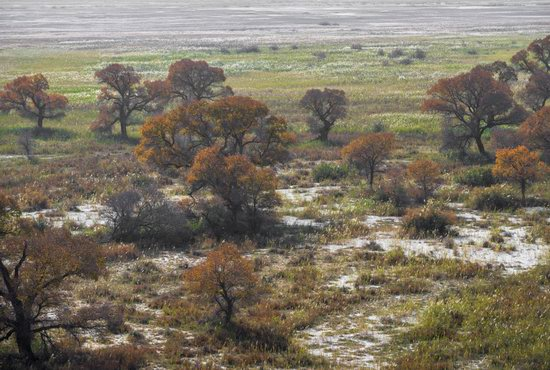 Autumn in the delta of the Ili River, Kazakhstan, photo 10