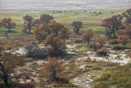 Autumn in the delta of the Ili River, Kazakhstan, photo 10