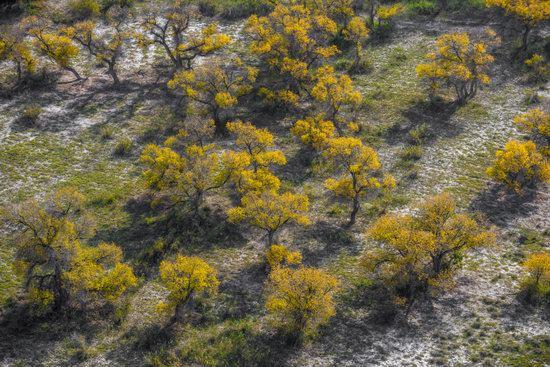 Autumn in the delta of the Ili River, Kazakhstan, photo 9