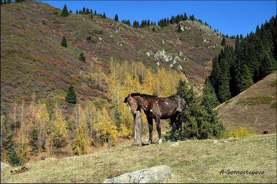 Hiking in Butakovskoe Gorge, Almaty, Kazakhstan, photo 7