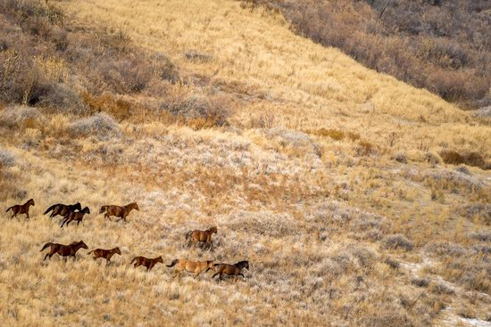 Late Autumn in the Southeast of Kazakhstan, photo 4
