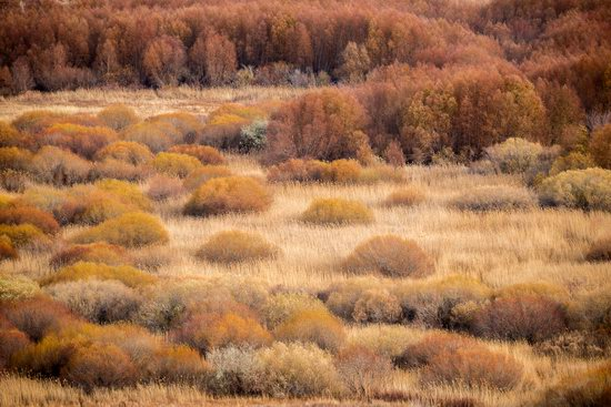 Late Autumn in the Southeast of Kazakhstan, photo 5