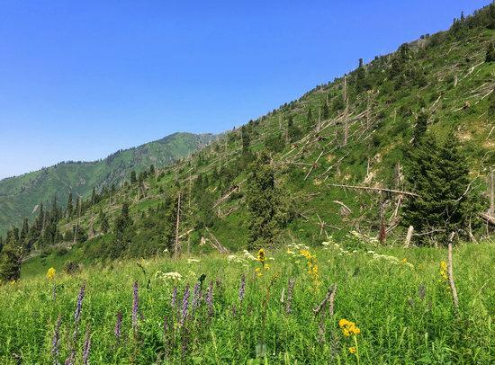 Hiking in Gorelnik Gorge, Kazakhstan, photo 14
