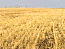 Kazakhstan agriculture wheat field